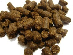 Corn Steep Liquor Pellets